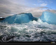 North pole. Ice mountains, polar bear.