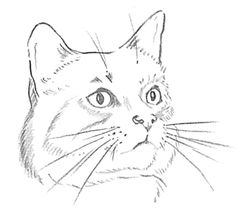 Step 4 How to Draw Cats and Kittens Faces adn Heads Lesson