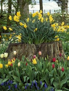 Tulips in tree stump... So cute!!!