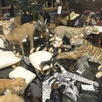 Animals : Shellie's Mania, Northern California Gift and Dollhouse Miniatures Store