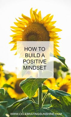 Use the power of your mind to bring more positive thoughts into your life and develop a positive mindset.