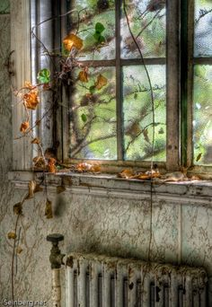 Through the window Old Buildings, Abandoned Buildings, Abandoned Places, Looking Out The Window, Through The Looking Glass, Old Windows, Windows And Doors, Window View, Through The Window