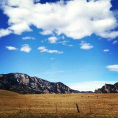 Cattle-speckled landscape. Rocky Mountains, Boulder, Colorado. By Calm Cradle Photo & Design #cows #cattle #ranch #farm #colorado #boulder #rockymountains #mountains #calmcradle