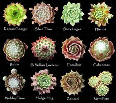 Assorted types of succulents Types Of Succulents Plants, Growing Succulents, Succulents In Containers, Cool Plants, Cacti And Succulents, Planting Succulents, Planting Flowers, Types Of Plants, Succulent Care