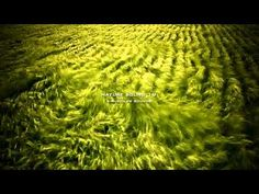 Nature Sound 19 - THE MOST RELAXING SOUNDS -