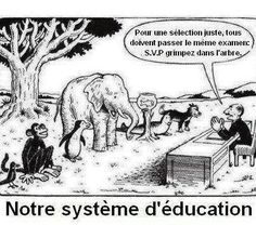 For a Fair Selection Everybody Has to Take the Same Exam Please Climb That Tree Our Education System Everybody Is a Genius but if You Judge a Fish by Its Ability to Climb a Tree It Will Live Its Whole Life Believing That It Is Stupid Albert Einstein Wisdom Quotes, True Quotes, Motivational Quotes, Funny Quotes, Funny Memes, Inspirational Quotes, Messed Up Memes, Quotes Pics, Real Life Quotes