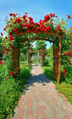 Buy Magic garden by vice_and_virtue on PhotoDune. Photo of a garden with lots of roses Most Beautiful Gardens, Beautiful Flowers Garden, Beautiful Roses, Beautiful Landscape Paintings, Beautiful Landscape Wallpaper, Photography Studio Background, Nature Photography, Wallpaper Nature Flowers, Best Background Images