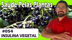 Saúde Pelas Plantas - Insulina Vegetal [controle da glicemia, anti-infla...
