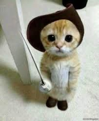 PUSS IN BOOTS!THE TINY KITTY LOOKS EXACTLY LIKE HIM.How would you get a get to behave so nicely?