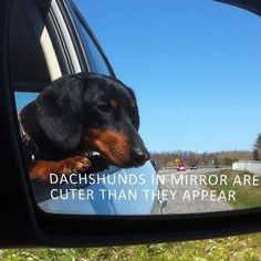 ;P - photo via I love Dachshunds fb page