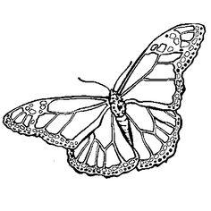 Dessin Papillon a colorier