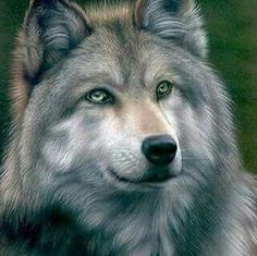 Beautiful color pencil drawing Grey Wolf by Colin Howard . Wolf Spirit, Spirit Animal, Wolf Pictures, Animal Pictures, Beautiful Creatures, Animals Beautiful, Tier Wolf, Animals And Pets, Cute Animals