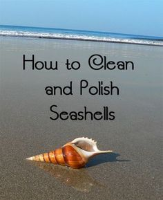 Fantastic Cleaning hacks are offered on our internet site. look at this and you wont be sorry you did. Deep Cleaning Tips, House Cleaning Tips, Cleaning Hacks, Diy Hacks, Cleaning Recipes, Suncatcher, Cleaning Painted Walls, Glass Cooktop, Seashell Art