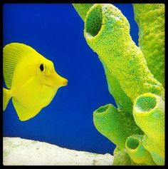 1000 images about fishy friends on pinterest betta fish for Petco saltwater fish
