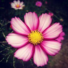 路边的野花。