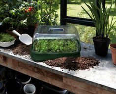 Green Life, Go Green, Mini Serre, Greenhouse Shed, Grow Kit, Potting Sheds, Grow Your Own Food, Culture, Plantation