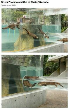 Tobe Zoological Park, Japan
