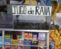 Travel Sights to make you Squirm – Frog Juice in Peru, Jugo de Rana
