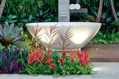 Get The Tropical Look – Australian Handyman Magazine - Modern Tropical Landscaping, Tropical Plants, Tropical Gardens, Tropical Backyard, Landscaping Ideas, Garden Front Of House, House Front, Tall Plants, Foliage Plants