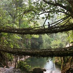 The living bridges at Umshiang, Meghalaya, India are made from the roots of the Ficus elastica tree. For more than 500 years locals have guided roots and vines of the tree. Its over a hundred feet long and can support the weight of fifty or more people. Ficus Elastica, Old Bridges, Twin Bridges, Natural Bridge, Tree Roots, Blog Voyage, Places To See, Hidden Places, Beautiful Places