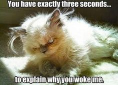 All my friends know this is me if they wake me up on a weekend!! :)