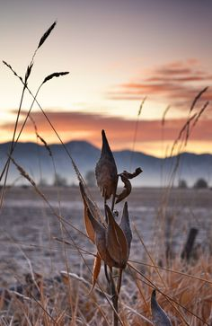 Hibernation: Fall in Cache Valley often mimics winter and in October and November of 2011 the seasons felt like they were running together. Snow came early, followed by a cold spell. The valley's vegetation has slipped into dormancy as seen in this pre-sunrise image from a Benson, Utah roadside in November 2011.