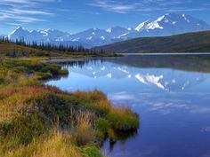 Wonder Lake, Denali, trumpeter swan.  Photograph: Rodney Lough Jr/Nature's Best Photography
