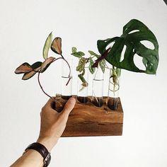 How adorable is my new propagation station by @hiltoncarter? Currently propagating: Hoya Carnosa tricolor, Begonia maculata, Oxalis triangularis, and Monstera obliqua #urbanjunglebloggers #propagating #propagation #houseplants #plantsmakepeoplehappy #urbanjungle #greenlife #plantlife