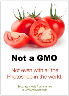 No matter what online image search tells you, there are no GMO tomatoes, and no GMO crops containing animal DNA. Get facts about GMOs at GMOAnswers.com