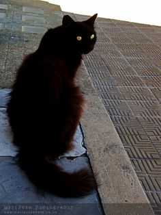 I love black cats. I believe they bring good luck. I try to encourage them to walk across my path. They never do.