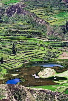 Jour 5 : Deuxième journée au Colca et départ pour Puno