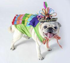 Dog Halloween costume: sparkly piñata