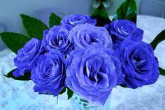 Blumen, Rosen, Blumenstrauß, Blau -