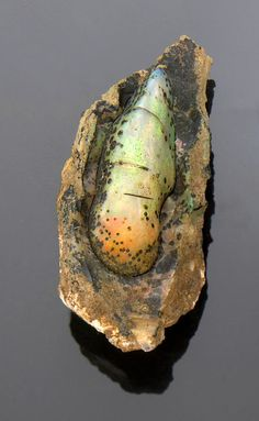 Opalized Nevada Pine Seed - Virgin Valley, Nevada
