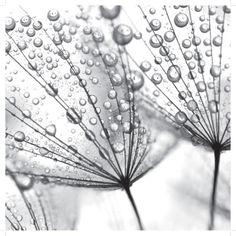 Fotografia em preto e branco Pôsteres na AllPosters.com.br