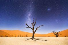Nur vom Mondlicht erhellt, leuchtet die Wüstenlandschaft in der Nähe von Deadvlei, Namibia. Die Bäume auf dem Bild sollen 900 Jahre alt sein, sich aber wegen der herrschenden Trockenheit nicht zersetzen.