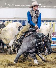 Ima Smooth Blue Cat Smooth As A Cat x Autumn Boon Quarter Horse, Stallion Born 2009 Barrel Racing Saddles, Barrel Racing Horses, Horse Halters, Horse Saddles, Cute Horses, Beautiful Horses, Reining Horses, Breyer Horses, Horse Senior Pictures