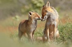 Foxy Love: A Peek Inside the Affectionate World of Foxes | 500px ISO | Bloglovin'