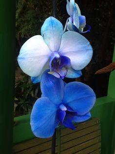 Orquídeas por Sergio Franceschini Filho