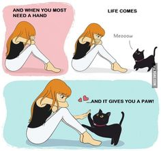 Cute & funny kittens cute funny and kittens Love Pet, I Love Cats, Crazy Cats, Cute Cats, Funny Cats, Neko, Animals And Pets, Cute Animals, Cat Comics