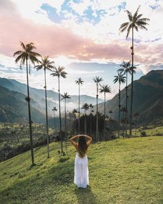 Hiking between giant palm tree groves in Valle De Cocura, Salento - Colombia San Diego Hiking, 2 Instagram, Destinations, Paris, South America, Central America, Travel Pictures, Beautiful Landscapes, Palm Trees