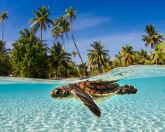 Here's a turtle. Because who doesn't love a picture of a turtle? Baby Animals Pictures, Cute Animal Pictures, Sea Turtle Pictures, Cute Baby Turtles, Magical Pictures, Ocean Creatures, Cute Little Animals, Underwater Photography, Animal Photography