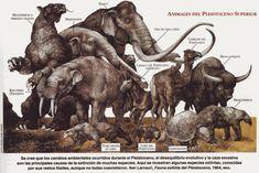 animales del Pleistoceno - Buscar con Google