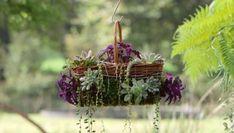 Cesto colgante con suculentas Cacti And Succulents, Bonsai, Cactus, Exterior, Plants, Ideas, Gardens, Propagating Succulents, Plant