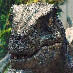 Blue Jurassic Park Raptor, Jurassic World Raptors, Blue Jurassic World, Jurassic Movies, Jurassic World Fallen Kingdom, Raptor Dinosaur, Dinosaur Art, Comic Art Fans, Falling Kingdoms