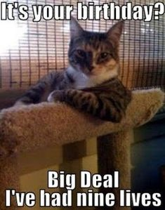 Happy Birthday Cool Cat Transparent Cartoon Free Cliparts