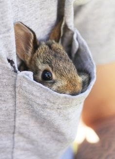 aww.this reminds me of our baby rabbit that passed away named pocket bc he loved to be in your shirt pocket:(