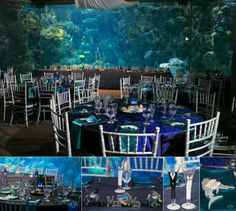 Aquarium wedding reception. My colors: pearl white, navy & coral.