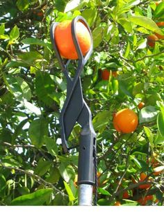 The Twister Fruit Picker is the newest and best fruit picking tool for harvesting apples oranges avocados grapefruit plums peaches and other tree fruit! - Grapefruit Tool - Ideas of Grapefruit Tool