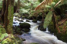 ChiGarden | Adventures in Tasmania, Part Four